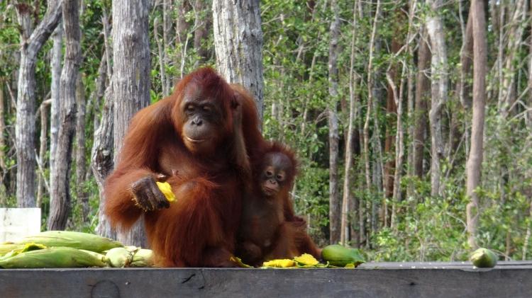 Orang-Utans retten – und uns selbst